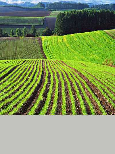 Аренда и продажа агро земли